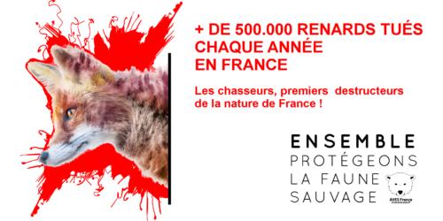 Malgré la consultation publique, 1430 renards seront tués par tirs de jour comme de nuit en Seine-Maritime. AVES France saisit la Commission Nationale du Débat Public !