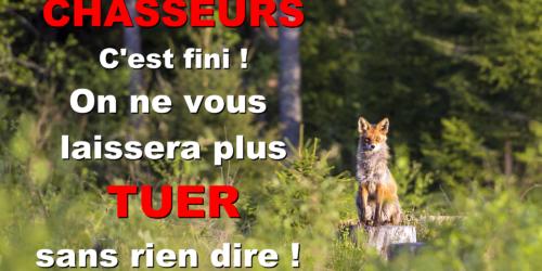 Renards de Seine-Maritime : le combat continue !