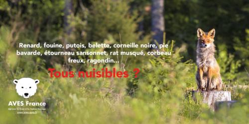 En Seine-Maritime, la fédération de chasse peut compter sur l'appui de la préfecture et de certaines mairies pour conserver dix espèces animales sur la liste des nuisibles.