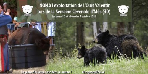 Non à l'exploitation de l'ours Valentin à la Semaine Cévenole d'Alès les 2 et 3 octobre 2021